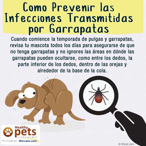 Como Prevenir Infecciones por Garrapatas