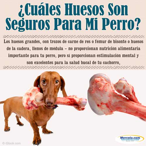 Huesos Seguros Para Mascotas