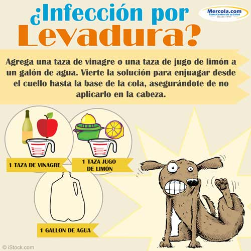 olor de infección de levadura de piel