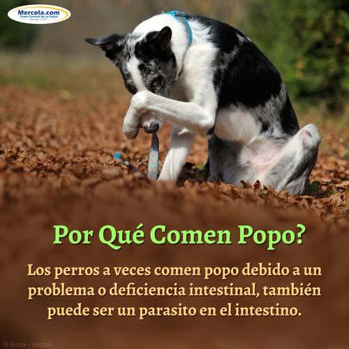 Perro Comiendo Popo