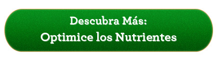 optimice los nutrientes