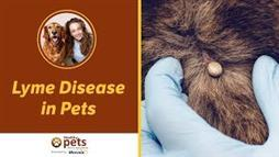 Lyme Disease in Dogs: The Feared Canine Disease that's Mostly Benign