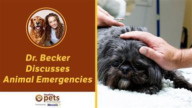 Put This Pet Emergency Plan in Place Today…