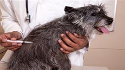How Much Money are You Wasting on Pet Vaccines?
