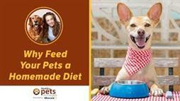 Three Major Reasons to Feed Your Pet a Homemade Diet…
