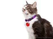 Does Your Cat Wear a Collar?
