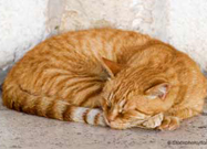 Pancreatitis: Is Your Cat Suffering from This Often Silent but Deadly Disease?