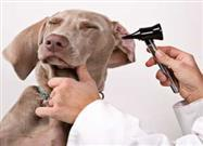 Finding the Best Vet for Your Pet