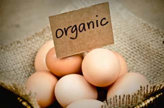 Are Organic Eggs Safer?