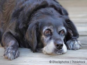 Senior Dogs And How To Treat Them