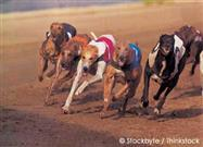 Dog Racing Now Illegal in 38 States
