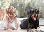 How Safe is Your Child Around Dogs?