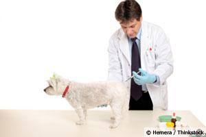 New Test Detects Canine Distemper in Recently Vaccinated Dogs