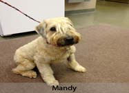 This Month's Real Story: Mandy