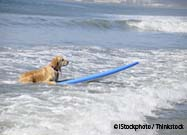 Are Surfing Dogs Really Happy… or Horrified?