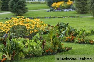 Image Result For How To Start Your Own Urban Garden