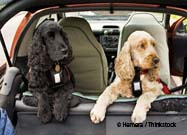 Is Your Pet Buckled Up?