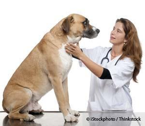 Dog Check-up