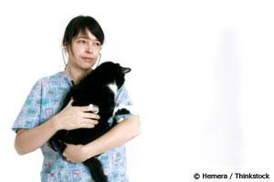 Why Cats Hide Pain and the Signs to Look For