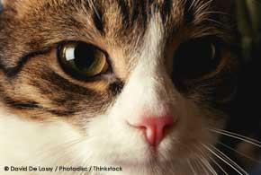 Cat Has Scratch On Eyelid