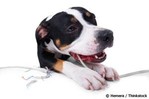 A Brilliant New Way to Treat Canine Problem Behaviors