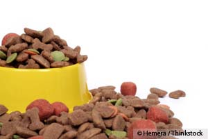 Update on Diamond Pet Food Recall: FDA Inspection Results and Expansion of Recall to Include Cat Food and a Second Diamond Plant