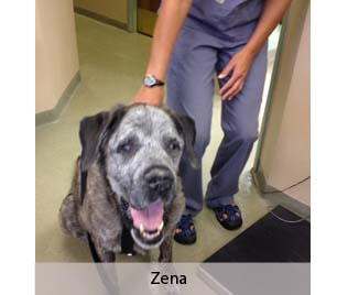 This Month's Real Story: Zena