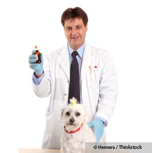 Having Trouble Finding a Holistic Vet in Your Area?