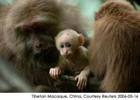 Primate Mother of Twins Defies the Odds