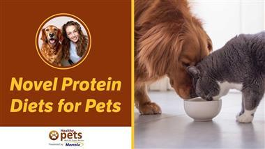 How to Heal Your Pet's Food Allergy