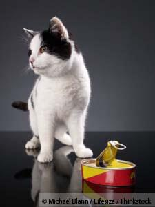 Inexpensive Good Quality Cat Food
