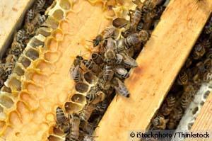 Monsanto Buys Leading Bee Research Firm