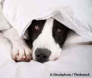 How to Help a Dog Suffering from Storm Phobia