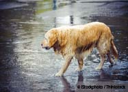 Lessons from Katrina Save Pets in Sandy's Path