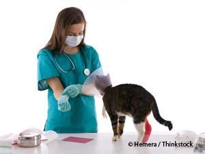 Cat Check-up