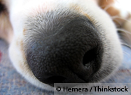 K9 Nose Work: Channeling Your Dog's Natural Instincts into a Fun Activity