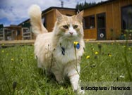 KittyCams Reveal Secret Lives of Free-Roaming Cats