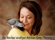 African Grey Parrot is First Known Non-Ape Species to Possess Reasoning Ability