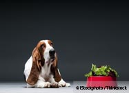 Vegan Dog Food: Is It Right to Force a Meat-Free Diet on Your Carnivorous Pet?