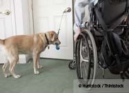 Assistance Dogs Change Lives
