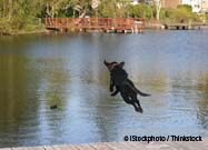 Dog Dock Jumping