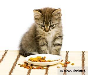Dry Food Diet