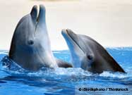 Do Dolphins Call One Another by Name?