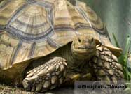 Saving Turtles and Tortoises from Extinction