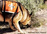 Rescue Dog Trained to Detect Highly Destructive Termite Species