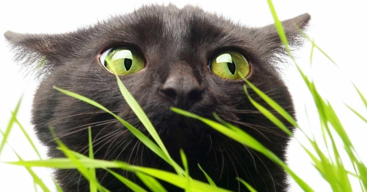 cat roundworm treatment