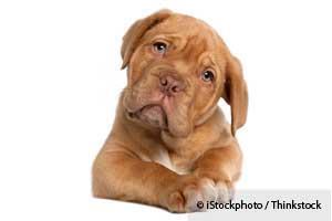 Emociones de su Perro