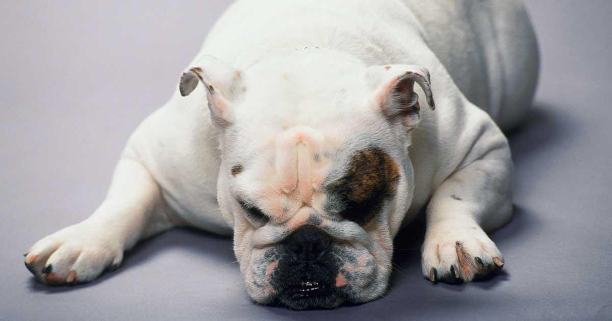 How to Treat Your Pet's Serotonin Syndrome
