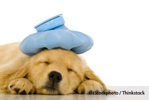 Pet Illness Treatment