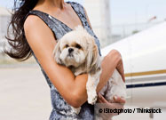 Airport Therapy Dogs Help Travelers Deal with Stress